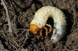 Chafer Grub and Leatherjacket Summit - at Burton Albion FC, 9 May